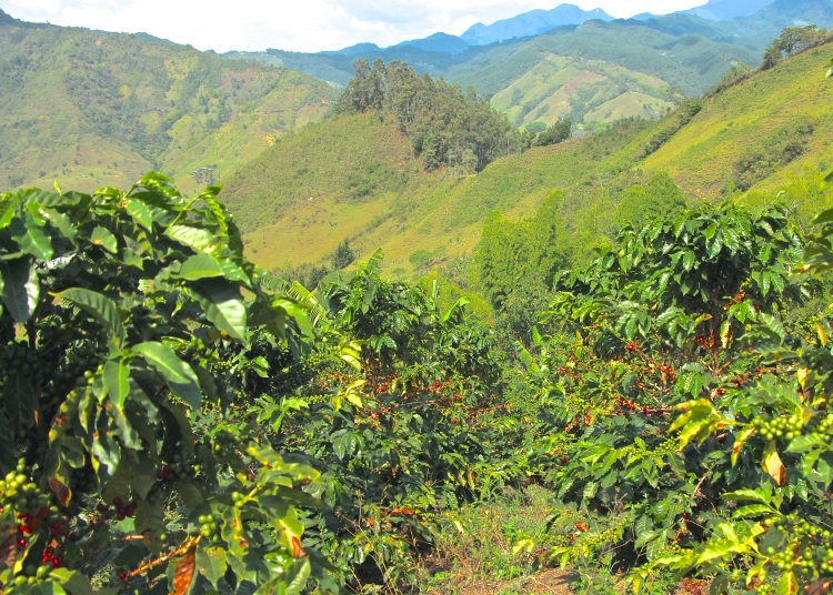 Colombia is the third largest coffee exporter in the world, behind Brazil and Vietnam.