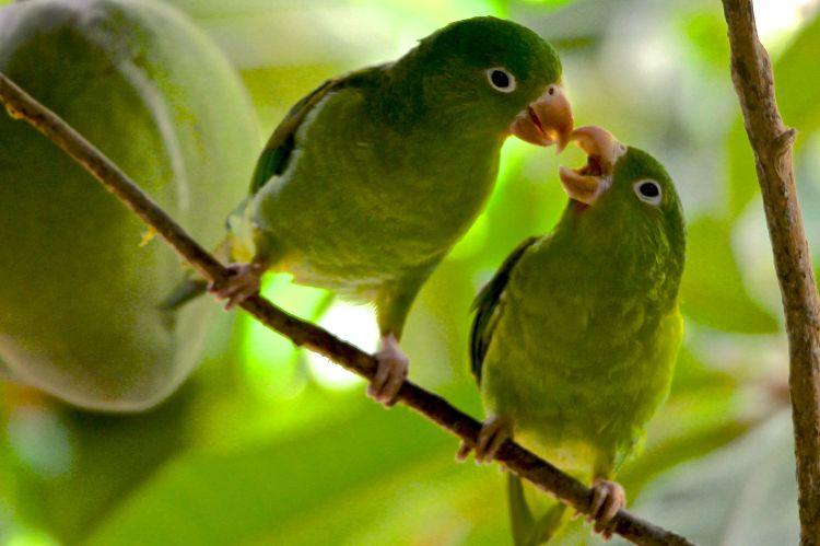 Parrots 3