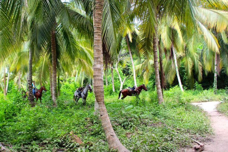 horses-2-tayrona-hike