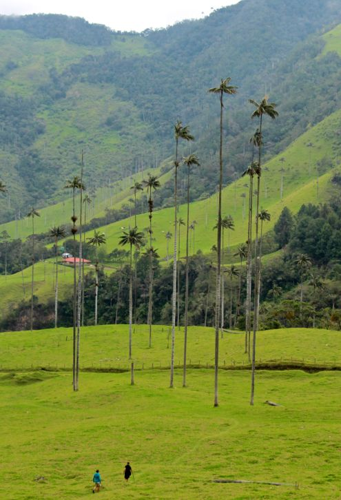 mom-and-dad-hiking-in-the-valle-de-cocora