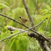 Lessons from Birding During the Pandemic